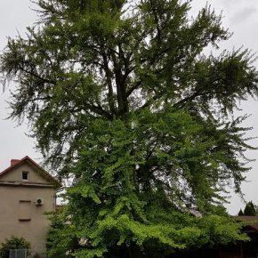Botanische Seltenheit in unserer Heimat